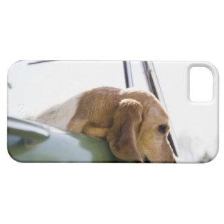 USA, Colorado, dog looking through car window iPhone 5 Cover