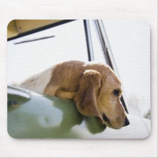 USA, Colorado, dog looking through car window Mouse Mat