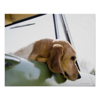 USA, Colorado, dog looking through car window Poster