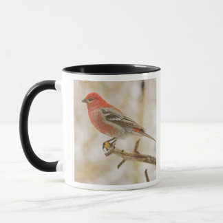 USA, Colorado, Frisco. Male pine grosbeak Mug