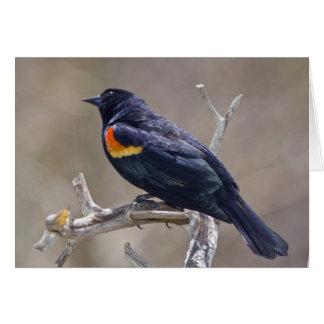 USA, Colorado, Frisco. Portrait of male Card