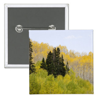 USA, Colorado, Gunnison National Forest, along 2 15 Cm Square Badge