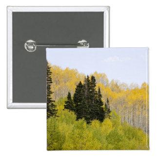 USA, Colorado, Gunnison National Forest, along 2 15 Cm Square Badge
