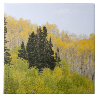 USA, Colorado, Gunnison National Forest, along 2 Large Square Tile