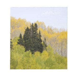 USA, Colorado, Gunnison National Forest, along 2 Notepad