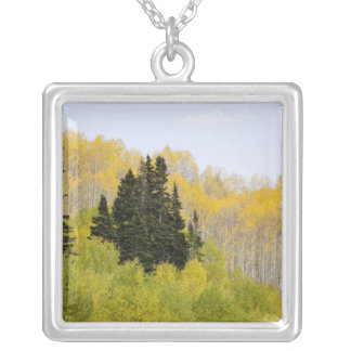 USA, Colorado, Gunnison National Forest, along 2 Silver Plated Necklace