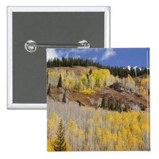 USA, Colorado, Gunnison National Forest, along 15 Cm Square Badge