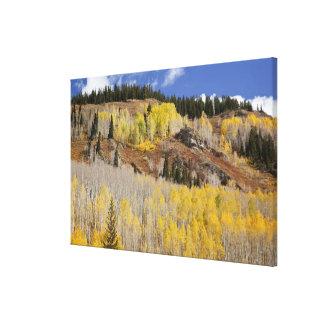 USA, Colorado, Gunnison National Forest, along Canvas Print