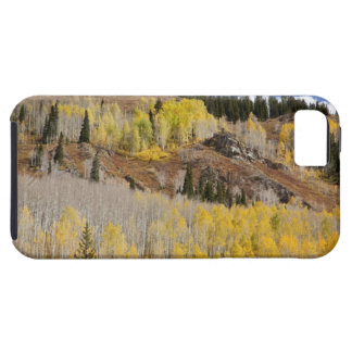 USA, Colorado, Gunnison National Forest, along iPhone 5 Cases