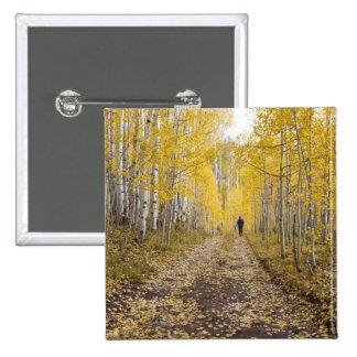 USA, Colorado, Gunnison National Forest near 15 Cm Square Badge