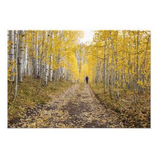 USA, Colorado, Gunnison National Forest near Photograph