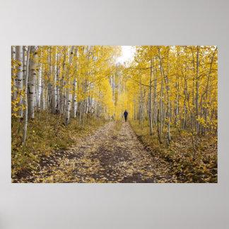 USA, Colorado, Gunnison National Forest near Poster