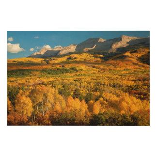 USA, Colorado, Gunnison National Forest Wood Print