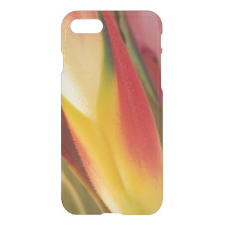 USA, Colorado, Lafayette, heliconia close-up iPhone 8/7 Case