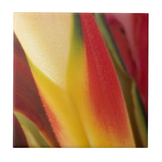 USA, Colorado, Lafayette, heliconia close-up Tile