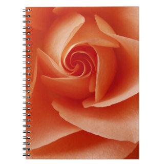 USA, Colorado, Lafayette. Peach rose close-up Notebook