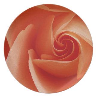 USA, Colorado, Lafayette. Peach rose close-up Plate