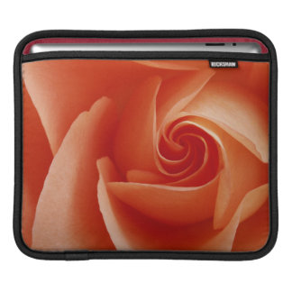 USA, Colorado, Lafayette. Peach rose close-up Sleeves For iPads