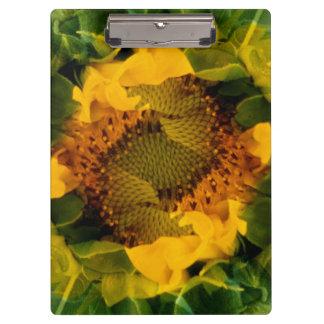 USA, Colorado, Lafayette. Sunflower montage Clipboard