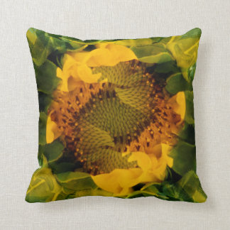 USA, Colorado, Lafayette. Sunflower montage Cushion
