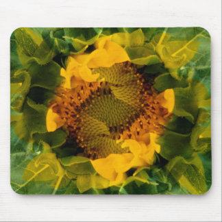 USA, Colorado, Lafayette. Sunflower montage Mouse Mat