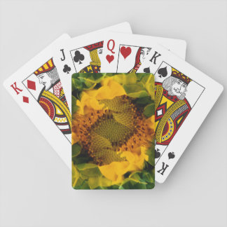 USA, Colorado, Lafayette. Sunflower montage Playing Cards