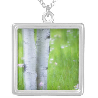 USA, Colorado, Lake City, Aspens and Silver Plated Necklace