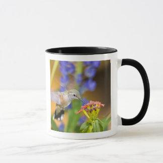 USA, Colorado, Lake County, Leadville. Female Mug