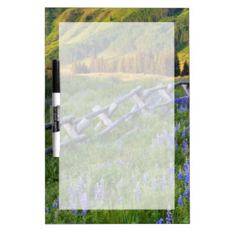 USA, Colorado. Lupines and split rail fence Dry Erase Board