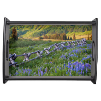 USA, Colorado. Lupines and split rail fence Serving Tray