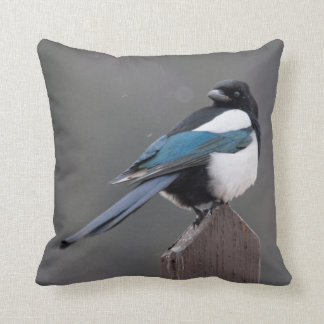 USA, Colorado, Magpie In Estes Park Cushion