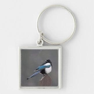 USA, Colorado, Magpie In Estes Park Silver-Colored Square Key Ring