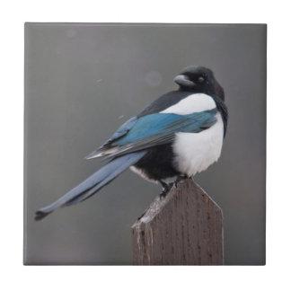 USA, Colorado, Magpie In Estes Park Small Square Tile