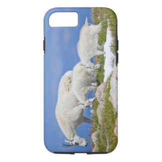 USA, Colorado, Mount Evans. Close-up of female iPhone 8/7 Case