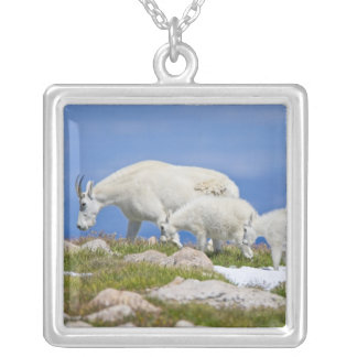 USA, Colorado, Mount Evans. Close-up of female Silver Plated Necklace
