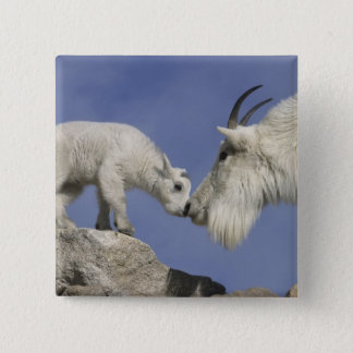 USA, Colorado, Mount Evans. Mountain goat mother 15 Cm Square Badge