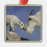 USA, Colorado, Mount Evans. Mountain goat mother Silver-Colored Square Decoration