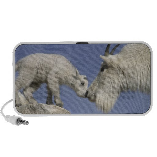 USA, Colorado, Mount Evans. Mountain goat mother Speakers