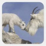 USA, Colorado, Mount Evans. Mountain goat mother Square Sticker