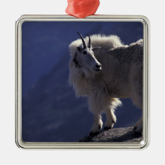 USA, Colorado, Mountain goat (Oreamnos Christmas Ornament