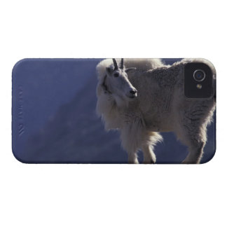 USA, Colorado, Mountain goat (Oreamnos iPhone 4 Case-Mate Case