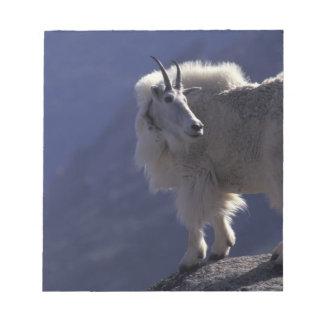 USA, Colorado, Mountain goat (Oreamnos Notepad