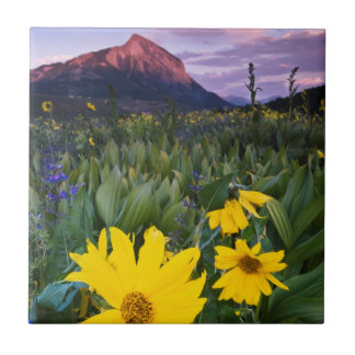 USA, Colorado, Mt. Crested Butte Tile