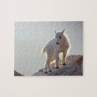 USA, Colorado, Mt. Evans. Close-up of young Jigsaw Puzzle