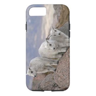 USA, Colorado, Mt. Evans. Three mountain goat iPhone 8/7 Case