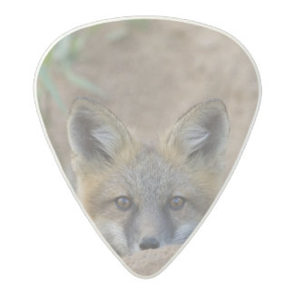 USA, Colorado, Pike National Forest. Shy red fox Acetal Guitar Pick