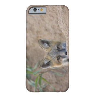 USA, Colorado, Pike National Forest. Shy red fox Barely There iPhone 6 Case