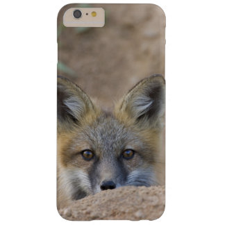 USA, Colorado, Pike National Forest. Shy red fox Barely There iPhone 6 Plus Case