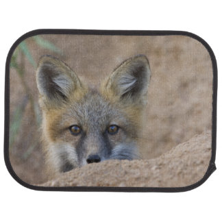 USA, Colorado, Pike National Forest. Shy red fox Car Mat