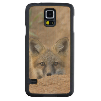 USA, Colorado, Pike National Forest. Shy red fox Carved Maple Galaxy S5 Case
